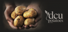 DCU POTATOES