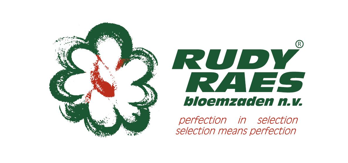 Image result for rudy raes